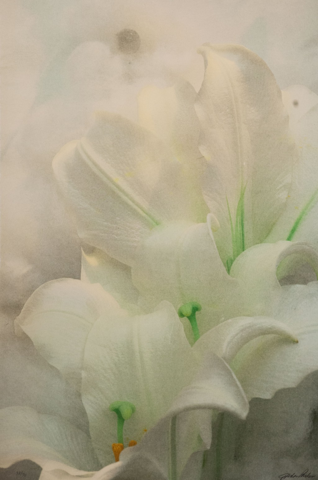 Angels image behind the flowers white lily
